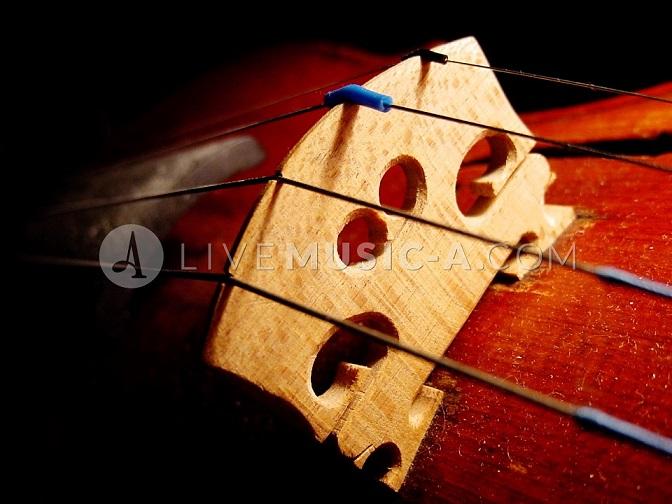 strings & bridge setup